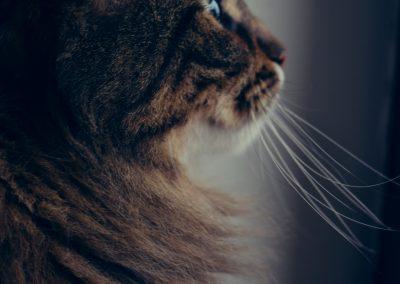 PET STEP - briga o mačkama
